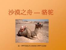 《沙漠之舟》PPT课件