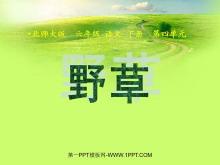 《野草》PPT课件2