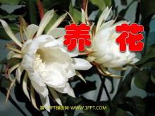 《养花》PPT课件