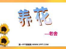 《养花》PPT课件2