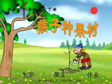 《猴子种果树》PPT课件