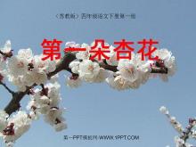 《第一朵杏花》PPT课件2