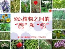 《植物之间的爱和恨》PPT课件