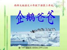 《企鹅爸爸》PPT课件2