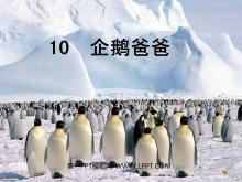 《企鹅爸爸》PPT课件3
