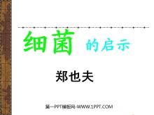 《细菌的启示》PPT课件3