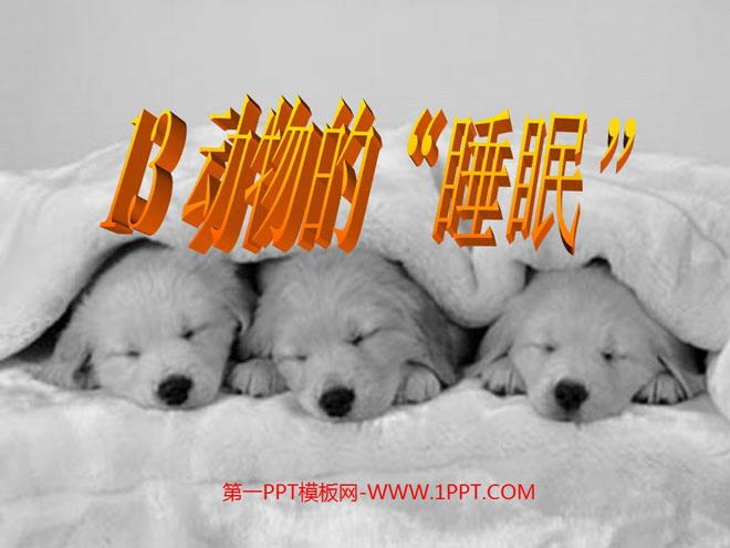《动物的睡眠》ppt课件4