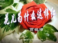 《花儿为什么这样红》PPT课件2