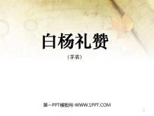 《白杨礼赞》PPT课件3