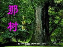 《那树》PPT课件4