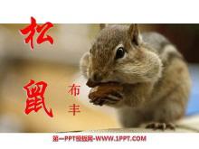 《松鼠》PPT课件3