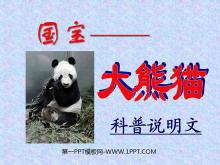 《国宝—大熊猫》PPT课件