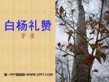 《白杨礼赞》PPT课件6