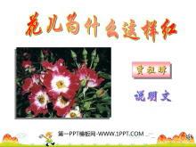 《花儿为什么这样红》PPT课件3