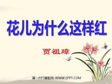 《花儿为什么这样红》PPT课件5