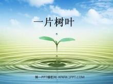 《一片树叶》PPT课件2