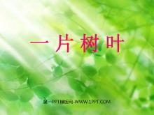 《一片树叶》PPT课件3