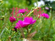 《花之咏》PPT课件4