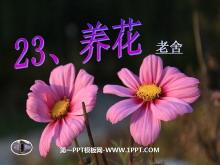 《养花》PPT课件4