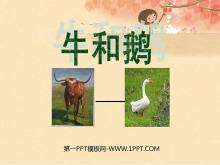 《牛和鹅》PPT课件3