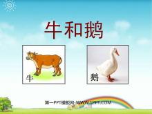 《牛和鹅》PPT课件5