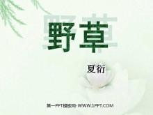 《野草》PPT课件5
