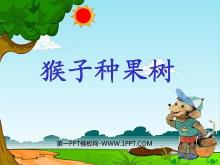 《猴子种果树》PPT课件2