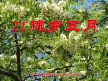 《槐乡五月》PPT课件4