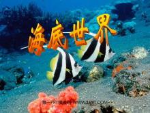 《海底世界》PPT课件5