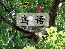 《鸟语》PPT课件4
