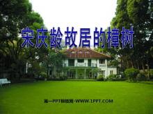 《宋庆龄故居的樟树》PPT课件4