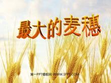 《最大的麦穗》PPT课件5