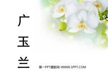 《广玉兰》PPT课件4