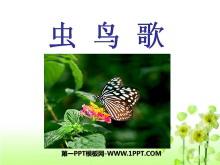 《虫鸟歌》PPT课件2