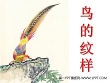 《鸟的纹样》PPT课件