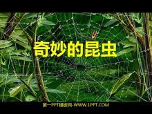 《奇妙的昆虫》PPT课件
