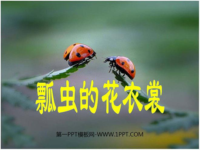 《瓢虫的花衣裳》PPT课件