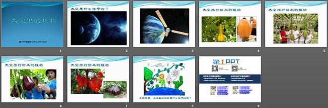 《太空里的植物》PPT课件