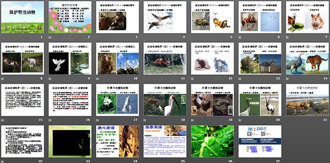《保护珍稀野生动物》ppt课件3