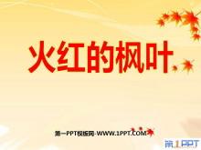《火红的枫叶》PPT课件3