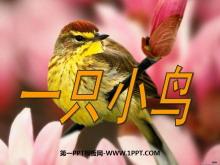 《一只小鸟》PPT课件