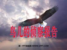 《鸟儿的侦察报告》PPT课件2
