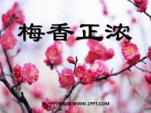 《梅香正浓》PPT课件2