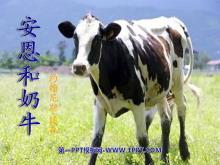 《安恩和奶牛》PPT课件