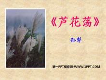 《芦花荡》PPT课件6