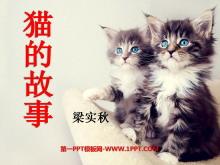 《猫的故事》PPT课件2