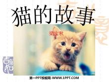 《猫的故事》PPT课件3