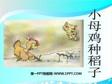 《小母鸡种稻子》PPT课件2