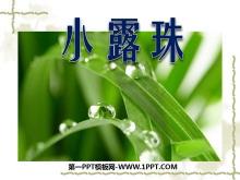 《小露珠》PPT课件4