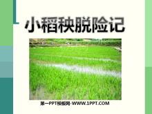 《小稻秧脱险记》PPT课件6